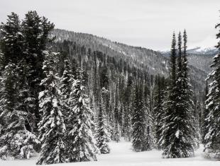 Зима на Малом Абакане (фото Г. Киселев)
