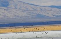 Утки над озером Улуг-Коль