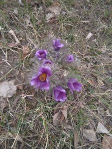 На эколого-просветительской тропе распустились первые цветы