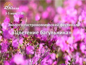 фестиваль Цветение багульника