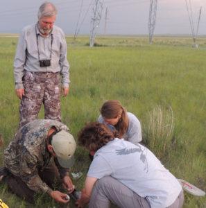 В Хакасии стартовал проект по кольцеванию и изучению журавлей