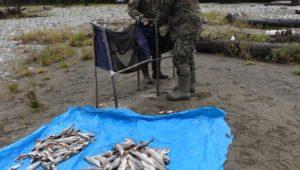 Изъятие и пересчет выловленной рыбы