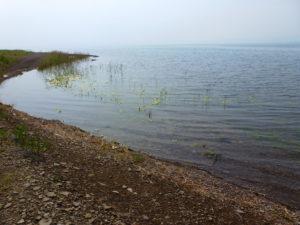 Массовое развитие кладофоры на озере Белё