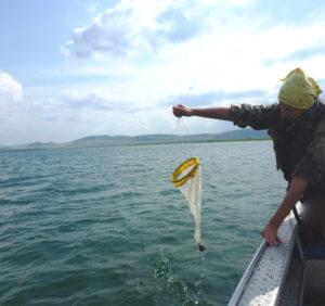 Отбор альгологических проб на озере Иткуль