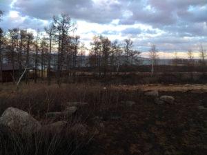 Последствия осенних палов травы