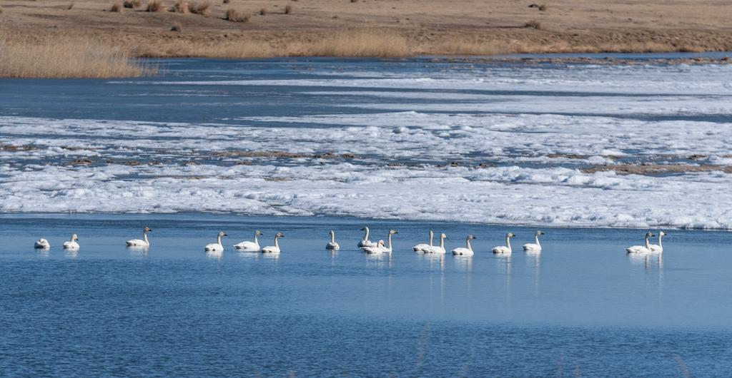 Птицы на озере беле