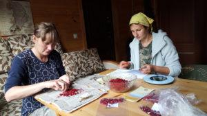Определение продуктивности ягодников