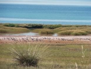 Журавли на озере Беле (фото В. Непомнящий)