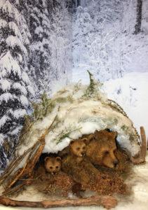 Медвежья берлога