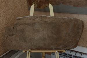 Макет оттеска петроглифа Оглахтинского хребта