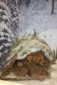 "Экспозиция ""Медвежья берлога"""