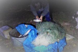 Изъятые сети и рыба