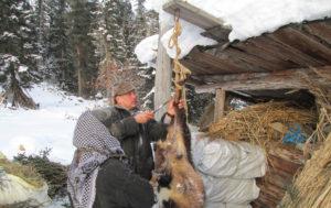 Госиспекторы заповедника помогли таежной отшельнице в разделке домашнего козла