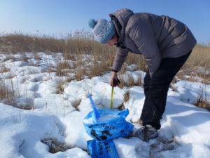 Взятие проб снежного покрова