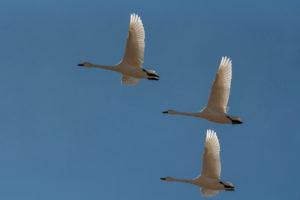 """Весенняя миграция птиц в заповеднике """"Хакасский"""""""