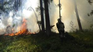 Природный пожар на территории горно-таежного участка